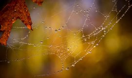 Spider Web With Water Droplets in Macro Photography Royalty Free Stock Image