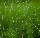 Spider Web with water droplets. A Spider Web with water droplets with a dark green background. Spider webs are intricate marvels of engineering, beautiful and Stock Images