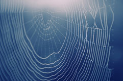 Spider web with water drops Stock Photography