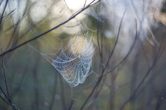 Spider web in a water drops Royalty Free Stock Images