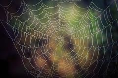 Spider web with water drops royalty free stock image
