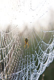 Spider web with water drops under sunlight Stock Photos