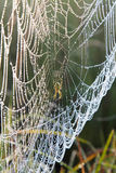 Spider web with water drops under sunlight Royalty Free Stock Photo