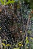 Spider Web, Water, Leaf, Invertebrate Stock Image