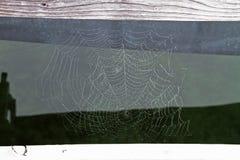 Spider Web, Water, Line, Invertebrate