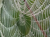 Spider Web, Water, Moisture, Invertebrate Royalty Free Stock Photos