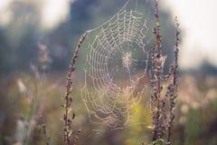 Spider Web, Water, Moisture, Morning Stock Photos
