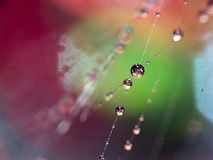 Spider web waterdrops Stock Images