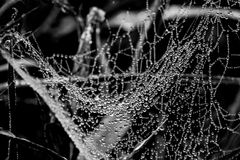 Spider web wet. Spider web with dew in the morning stock image