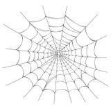 Spider web on white