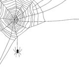Spider and web  on white,  Royalty Free Stock Photo