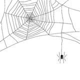 Spider and web  on white,  Royalty Free Stock Photography