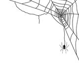 Spider and web  on white,  Royalty Free Stock Image