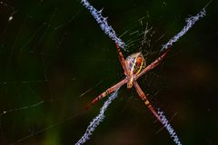 Spider in web royalty free stock image