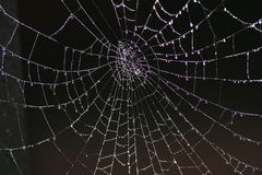 Free SPIDER WEB WITH DEW Royalty Free Stock Photo - 2038565