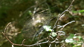 Spider Web in the Woods stock video footage
