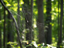 Spider Web In the Woods. A large, radial spider web lit from behind by the sun stretches across tree branches in the woods Stock Images
