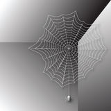 Spider in the web Royalty Free Stock Image