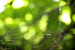A spider web royalty free stock photography