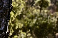 Spider web. Woven weaveilluminate loneliness, abandonment  predator devour trap design architecture, arachnid, insect Royalty Free Stock Photos