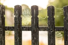 Spider webb on fence in the morning Stock Photography