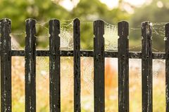 Spider webb on fence in the morning Royalty Free Stock Images