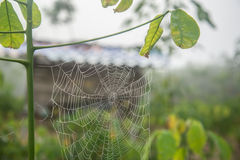 Spider webby in the farm Stock Photo