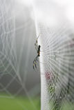 Spider webs. Stock Photography