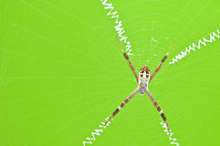 spider webs on clear green background Royalty Free Stock Images