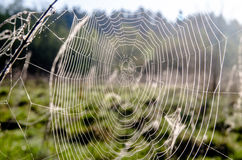 Spider webs and the dew Royalty Free Stock Photo