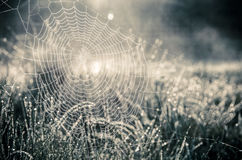 Spider webs and the dew on the grass Royalty Free Stock Images