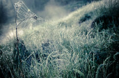 spider webs and the dew on the grass at the edge Stock Photography