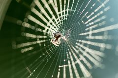 Spiderweb in the making Royalty Free Stock Image