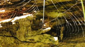 Spider webs stock video footage
