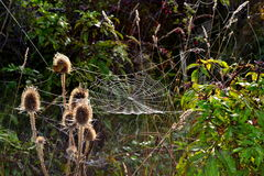 Spider webs field Royalty Free Stock Photo