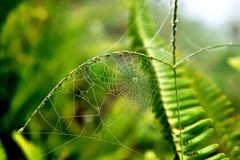 Spider webs Royalty Free Stock Photos