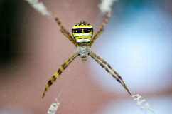 Spider webs are given light background blur. Royalty Free Stock Photos