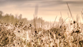 Spider webs in the grass in a meadow Stock Images