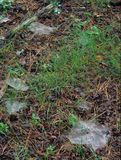 Spider Webs In Grass Stock Images