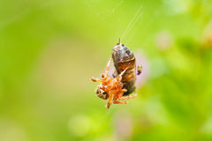 Spider webs Stock Photos