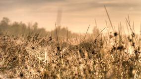 Spider webs  in the rays of the rising sun Royalty Free Stock Photography