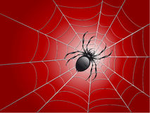 Spider on wed Stock Photo