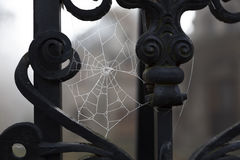 Spider weg with hoarfrost Royalty Free Stock Image
