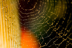 A spider in a wet and dewy web. Stock Photography