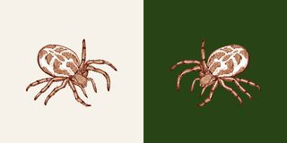 Spider on a white background and a uniform green background vector illustration