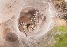 Spider in white radiation Royalty Free Stock Images