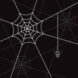 Spider white web  Stock Images