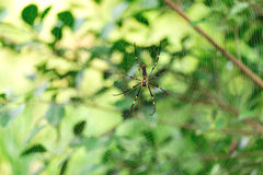 Spider in wide web Stock Photo