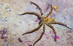 A spider in wild royalty free stock photo