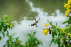 Spider will eat the bait royalty free stock image